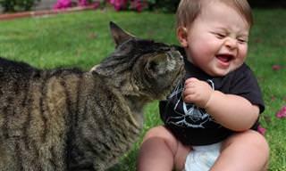 18 שיעורים לחיים שילדים לומדים מחתולים