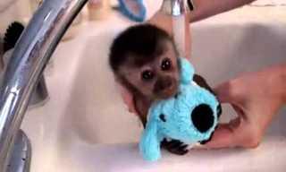 רגע של נחת: קופיף חמוד עושה מקלחת!