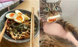 15 תמונות נהדרות של בעלי חיים חמודים ומצחיקים