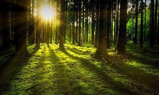 בחן את עצמך: איזה סוג עץ מסתתר באישיותך?