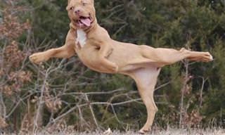 17 כלבים בתנוחות ומצבים מיוחדים ונדירים