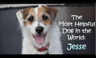 כלב מי שעוזר בבית - סרטונים חמודים