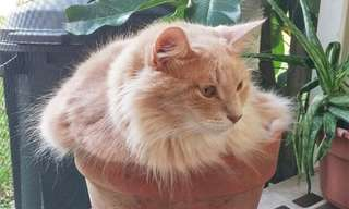 17 חתולים שהתבלבלו וחשבו שהם צמחים