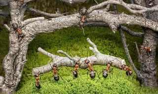 נמלים אמיתיות בעולם דמיוני