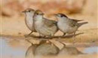 ציפורים מדבריות בארץ ישראל