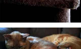 חתולים אז והיום - מיאו עושה מסז' ללב!