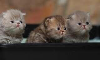 תמונות מתוקות של גורי חתולים!