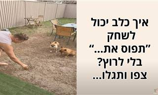 """איך כלב יכול לשחק """"תפוס את..."""" בלי לרוץ? גלו בסרטון מצחיק"""