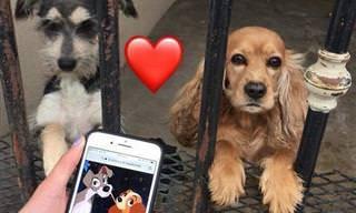 18 תמונות מחממות לב של בעלי חיים חמודים