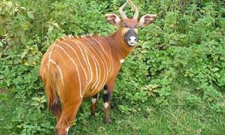 12 בעלי חיים יפהפיים שנמצאים בסכנת הכחדה חמורה
