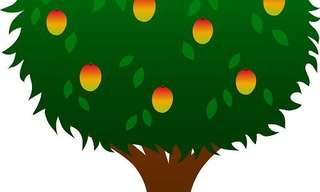לקטוף את פירות החיים - משל חשוב