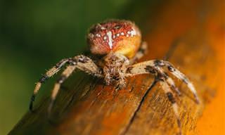 10 פתרונות טבעיים ומועילים להרחקת עכבישים