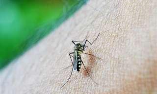 12 סיבות לכך שיתושים נמשכים דווקא אליכם