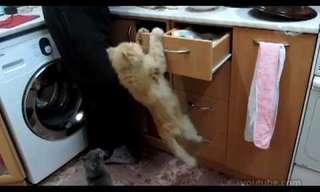 החתולים הסמוראים - לקט משעשע!