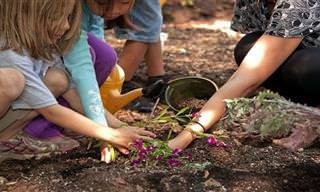 10 פרחים נפלאים שתוכלו לגדל בבית ובגינה