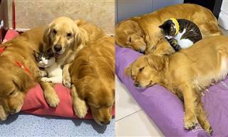ארבעה במיטה אחת - סרטון חמוד על חברים שחולקים את הכל ביחד...