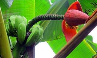 11 מיני חיות, צמחים ויצורים שהתגלו בשנים האחרונות