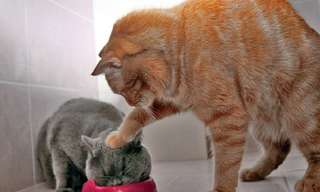 החתולים האלה שכחו איך להיות חתולים