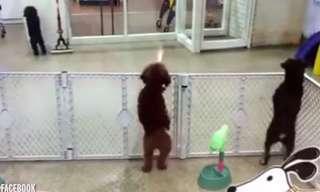 כנראה שזה הכלב השמח ביותר בעולם