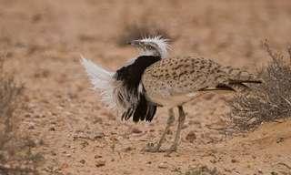 גן עדן לציפורים - תמונות מדהימות של ציפורי ארצנו!