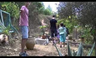 פעילות לשיקום הדבורים בישראל