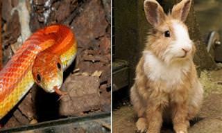 הבדיחה על הנחש והארנב העיוורים שניסו לזהות אחד את השני
