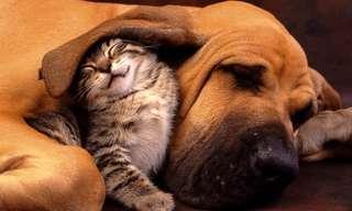 חתולים וכלבים שחולקים חברות אמת מקסימה
