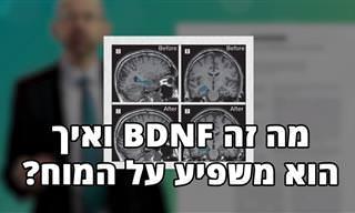 מה זה BDNF ואיך זה משפיע על תפקוד המוח ודיכאון?
