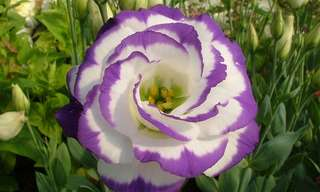 10 הפרחים היקרים ביותר בעולם