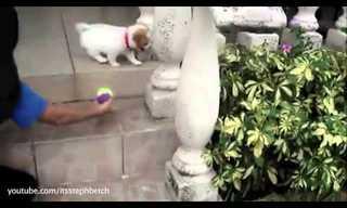 כלבים מפספסים במדרגות - חמוד!