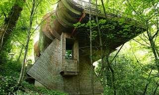 מעון וילקינסון - בית העץ המושלם