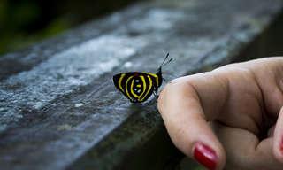 משפטים מעוררי השראה על מתנת החיים