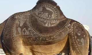 אמנות מדהימה על פרוות גמלים