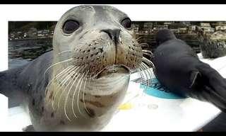 כלב ים מנסה לטפס על גלשן - מתוק!