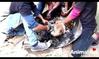 אנשים עם לב רחב מצילים כלבה שנתקעה בזפת רותחת