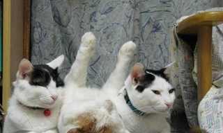 החתול העצלן ביותר ביפן!