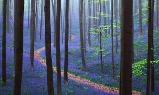 סדרת תמונות של יערות מסתוריים מרחבי העולם