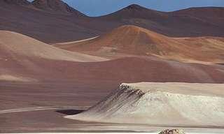 פריחה מדהימה במדבר אקטמה