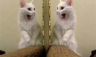 17 חתולים שיעלו לכם חיוך על הפנים