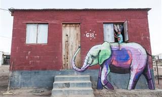 15 ציורי גרפיטי של פאלקו אחד שמשתלבים עם רחובות דרום אפריקה
