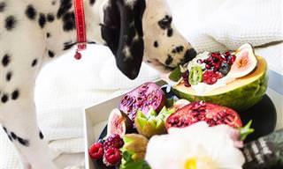 פירות וירקות שכדאי ואסור לתת לכלבים לאכול