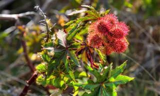 17 צמחים רעילים לבעלי חיים שכדאי להכיר