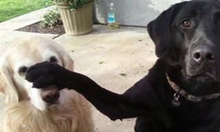 19 מצבים ומאבקים שרק בעלי כלבים יכולים להבין