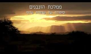 הכירו את הציפור הכי חברותית בישראל
