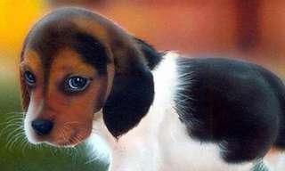"""""""אפקט הכלב החמוד"""" - 100 אחוזי הצלחה!"""