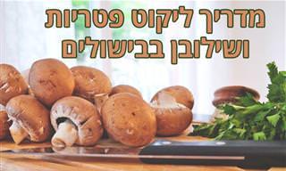 מדריך לליקוט פטריות ו-10 זני מאכל שאפשר למצוא בישראל