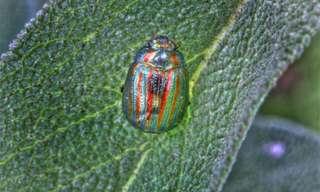 החרקים היפים ביותר בטבע!