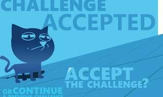 חתול תעלול - משחק אסטרטגיה