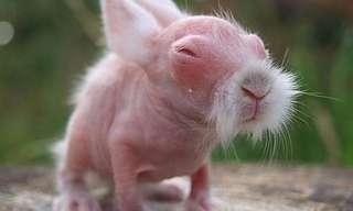 אוסף תמונות: חיות ללא פרווה