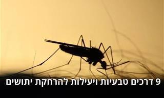9 פתרונות טבעיים שירחיקו מכם יתושים ביעילות